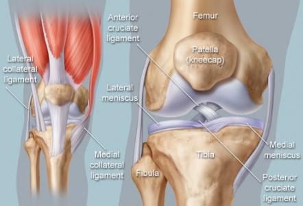 Knee / Osteoarthritis / Wear